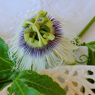 Passion Flower on Passion Fruit Flower